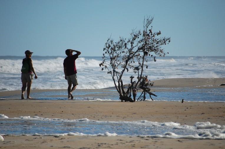 Assateague Shell Tree