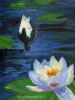 White Waterlillies