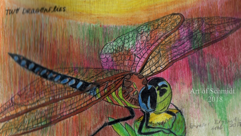 Sketchbook, Emperor Dragonfly, edited 2