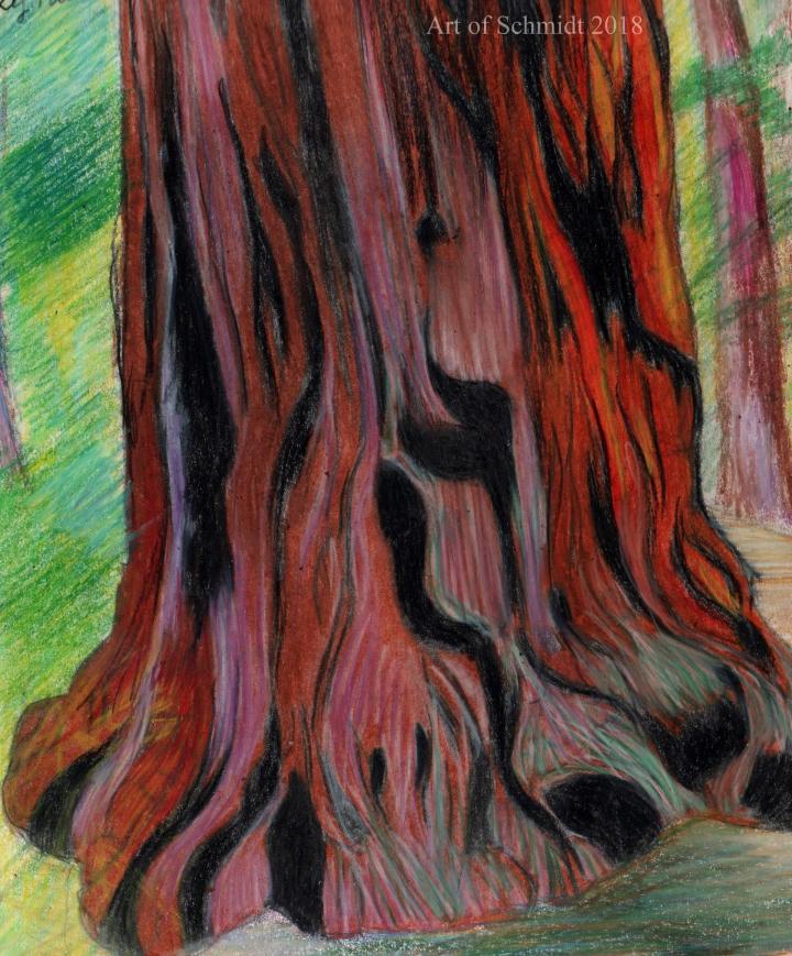 Sketchbook, Redwood, edited