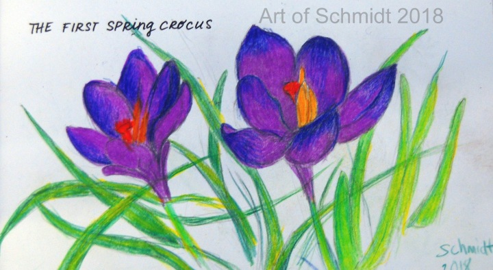 first spring crocus, flat