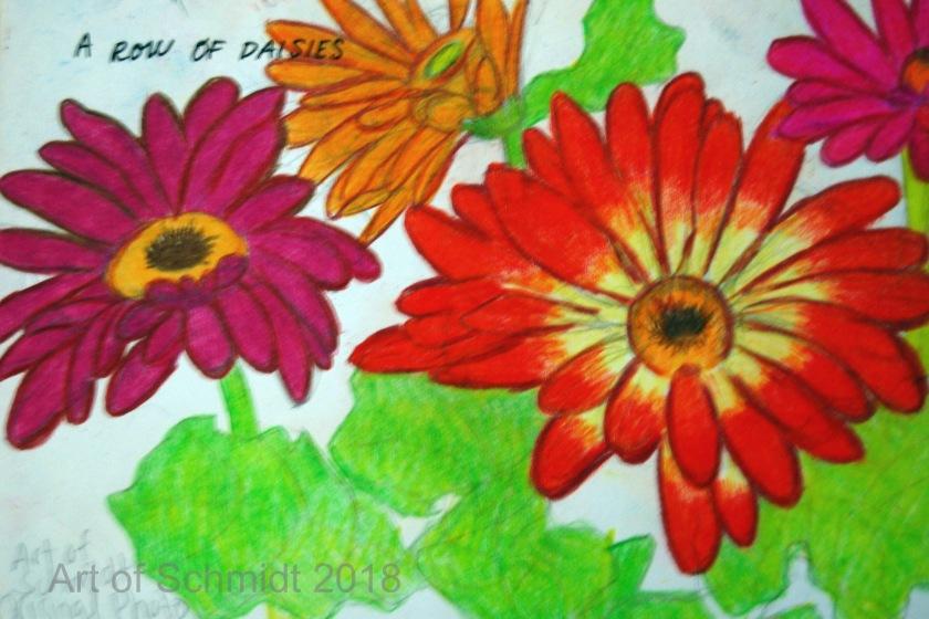 Gerbera daisies, flat