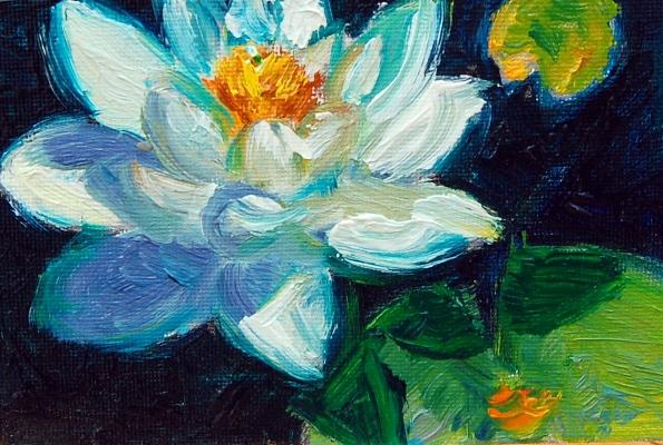 white water lily, mini, flat