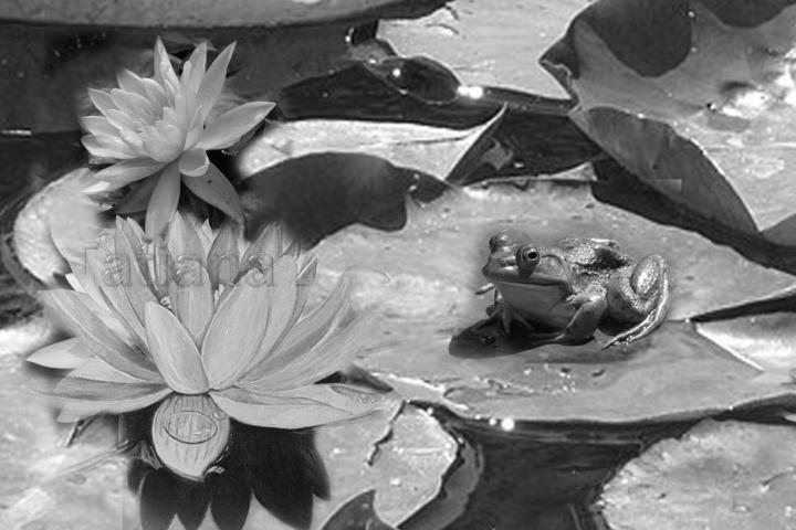 Water Liliy redux, final